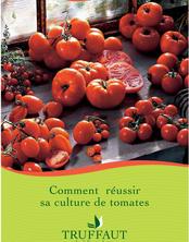 Comment réussir sa culture de tomates