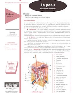 Fiche Bio 6 - partie 1 : La peau (structure et fonctions)