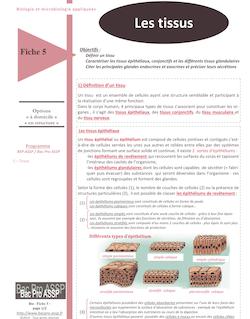 Fiche Bio 5 : Les tissus