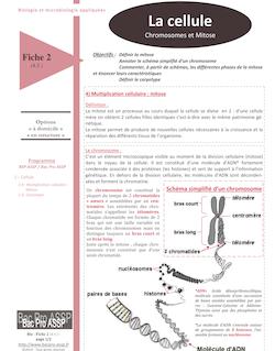 Fiche Bio 2 (4.5.) : La cellule, chromosomes et mitose