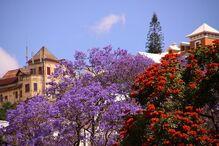 Végétation de Madagascar