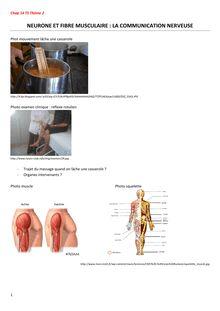 Exercice sur les neurone et la fibre musculaire - SVT Terminale S