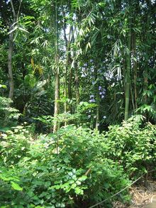 Une forêt Masoala
