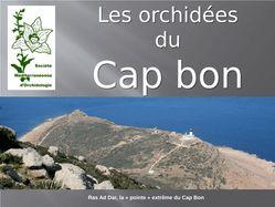 Orchidées au Cap Bon