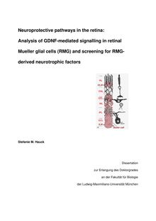 Neuroprotective pathways in the retina [Elektronische Ressource] : analysis of GDNF-mediated signalling in retinal Mueller glial cells (RMG) and screening for RMG-derived neurotrophic factors / vorgelegt von Stefanie M. Hauck