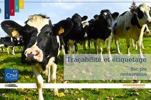 La famille des produits laitiers: la traçabilité du lait