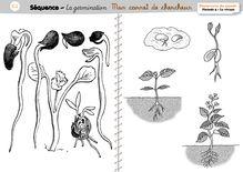 DDM CP/CE1 – Le vivant : la germination des végétaux - Le carnet de chercheur