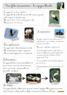 La cigogne blanche : fiche documentaire