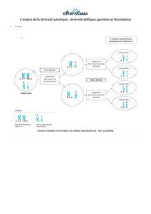 L'origine de la diversité génétique : diversité allélique, gamètes et fécondation