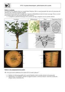 TP - La plante domestiquée de SVT Terminale