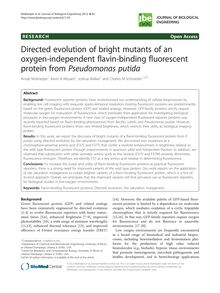 Directed evolution of bright mutants of an oxygen-independent flavin-binding fluorescent protein from Pseudomonas putida