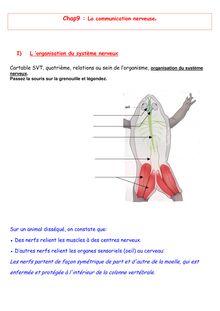 Chapitre de SVT 4e sur les connections nerveuses
