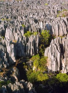 Reserve Naturelle Tsingy Bemaraha